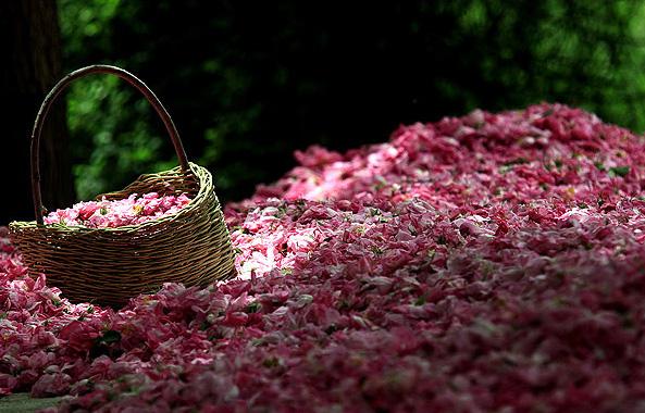 Rózsavíz