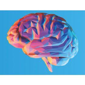 Agyműködés, agyműködés serkentése